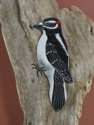 Woodpecker-for-web